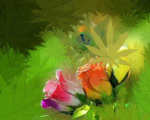 remember that cannabis flowers are like roses... roses come in many colors and the right color given to the right person can open many doors... cannabis flowers come with many different effects and the right flower given to the right person with the right illness that flower is good at treating can ease much suffering. —                                                                     https://www.facebook.com/photo.php?fbid=530336420319705&set=o.154533251224064&type=3&src=https%3A%2F%2Ffbcdn-sphotos-g-a.akamaihd.net%2Fhphotos-ak-prn1%2F525999_530336420319705_1779578205_n.jpg&size=480%2C384