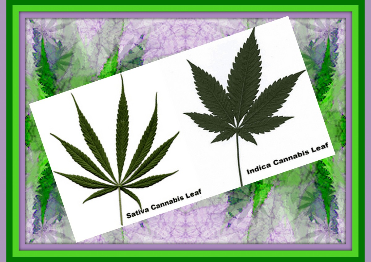 anti hemp essays The history of marijuana (or cannabis/thc) stems back over 10,000 years and is widely recognized as one of the most useful plants on the planet yet it was made illegal in the united states in the early 20th century due to political and economic factors history of the drug.